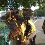 Для верблюда