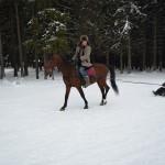 Скиджординг на лошадях